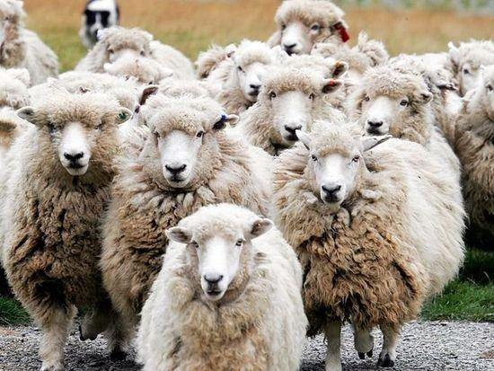 步步惊心 巧用心理学技巧提高网站流量和销量系列五:羊群效应  运营  第1张